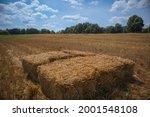 Hay Bales In Freshly Cut Straw...