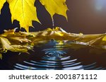 Yellow Autumn Maple Leaf With...
