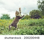 Stock photo cute little kitten is playing with soap bubble in summer park 200200448
