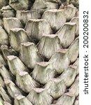 Bark Palms   Upper Trunk Detail ...