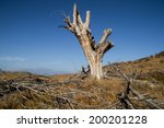 The Dead Tree On The Hillside.
