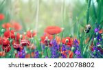 beautiful background of red... | Shutterstock . vector #2002078802