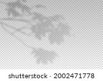 shadow of leaf from window....   Shutterstock .eps vector #2002471778