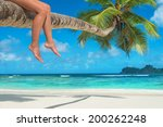 Woman's Legs On A Palm Tree At...