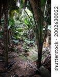 Lost In Jurasic World Seychelles