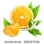 vector illustration of fresh... | Shutterstock .eps vector #200267426