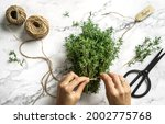 hands tie bouquet of fresh... | Shutterstock . vector #2002775768