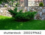 green bush on the background of ... | Shutterstock . vector #2003199662