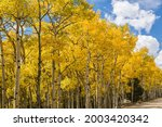 Fall quaking aspens on Rainbow Lake Road off the Peak to Peak Highway in Colorado, USA