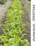 an image of a field | Shutterstock . vector #200357666