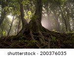 Sun Rays And Old Tree With...