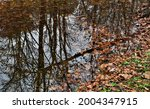 Beautiful autumn leaves in a small creek with trees being reflected onto the calm waters.   Paoli Lake State Park