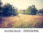 vintage photo of forest in... | Shutterstock . vector #200436986
