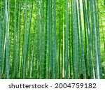 bamboo forest in sagano  kyoto   Shutterstock . vector #2004759182