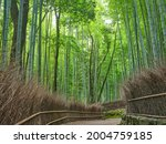 bamboo forest road in kyoto...   Shutterstock . vector #2004759185