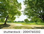 fresh green trees and sunbeams   Shutterstock . vector #2004760202
