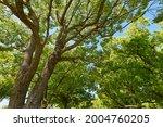 fresh green trees and sunbeams   Shutterstock . vector #2004760205