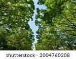 fresh green trees and sunbeams   Shutterstock . vector #2004760208