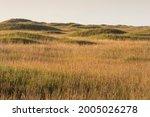 Dunes On Padre Island National...