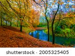 A river in the autumn forest....