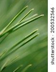 green grass background | Shutterstock . vector #200532566