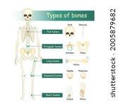 bones types of human skeleton ... | Shutterstock .eps vector #2005879682