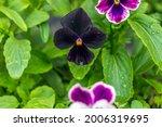 Multicolored Flowers On...