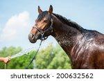 Bay Horse Enjoying The Shower...