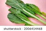 Caesin Leaf Vegetable Plant...