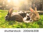 Three Rabbits Eating Green...