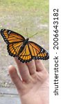 Small photo of Viceroy Butterfly on Human Hand