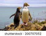 Penguin Couple At Wedding...