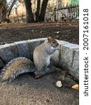 Squirrel Eating Nuts In Park