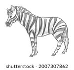 Equine Mammal With Stripes On...