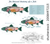 anatomy of a fish. fish...   Shutterstock .eps vector #2008497215