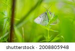 Large Butterfly With Rigid...