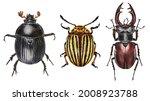 Dung Beetle  Colorado Beetle ...