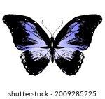 color morpho butterfly  ... | Shutterstock . vector #2009285225