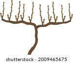 spur pruned grape vine plant... | Shutterstock .eps vector #2009465675