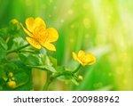 yellow flowers | Shutterstock . vector #200988962