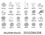 vector food icons. colored...   Shutterstock .eps vector #2010286208