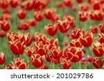 an image of tulip | Shutterstock . vector #201029786