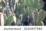 Cactus Succulent Plant ...
