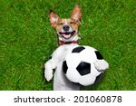 Soccer Dog Holding A Ball And...
