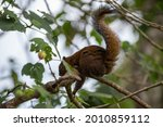 Squirrel In Tree Eating Nuts