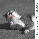 Homeless Street Cat Licking Its ...