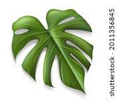 single tropical leaf monstera...   Shutterstock .eps vector #2011356845