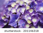 close up of blue and purple... | Shutterstock . vector #201146318
