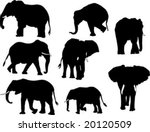 Elephant Small Collection...