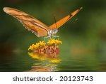 Dryas Julia Butterfly  Costa...